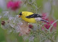 Konkurs Tapeta dnia Pulpit, Colours, Bird, Animals, Animales, Animaux, Birds, Animal, Animais