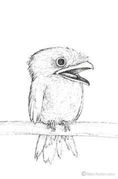 """""""Frogmouth!"""" Ink on paper.  http://threesixfive.co.za/2012/06/21/frogmouth/frogmouth/"""
