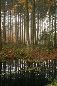 Idyllic hareskov forest