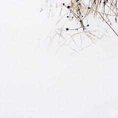 Garden under the snow by Evemaude