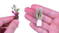 tutorial: miniature plants