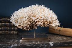Corail pics nids blanc