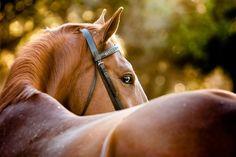 beautiful horses tumblr - Google Search