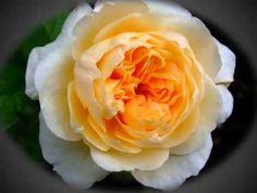 Beautiful Blooms 169 (Senza Una Donna)