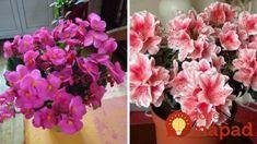 Ako jednoducho som priviedla z životu moje kvety: Dajte im aj vy tento životabudič, odvďačia sa krásou a zdravím!