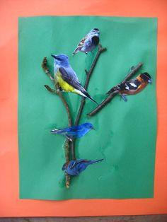 [birds+004.jpg]
