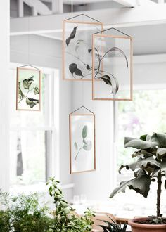 Three Danish Companies Release Transparent Botanical Prints - Design Milk