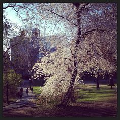 Central Park blooming Photo by sethdalemagic