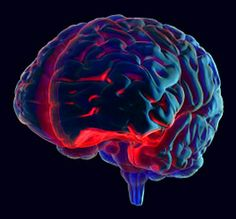 Traumatic Brain Injury News in California -  #News
