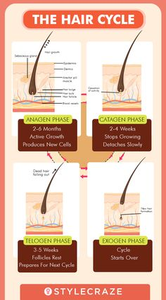 Hair Growth Cycle - Understanding the Stages of Hair Growth