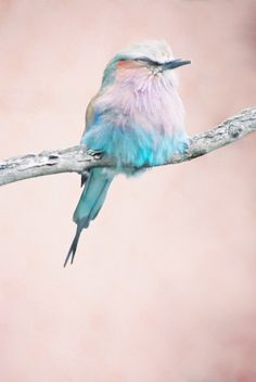 A pink sky and a blue bird : happiness that's all !