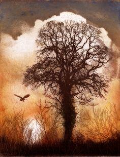 Barn Owl, Etching | Ian MacCulloch