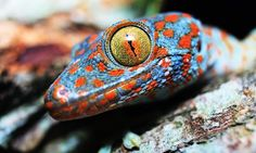 Beautiful Creatures – 21 Amazing Gecko Close Ups