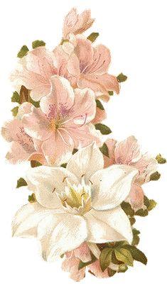 https://blackwidow12.files.wordpress.com/2015/03/bertha-maguire-pink-flowers.png