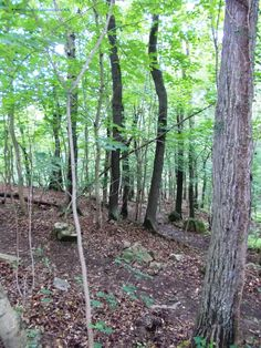 Hiking back in Thale