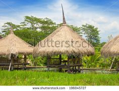 straw bungalows in the rice fields