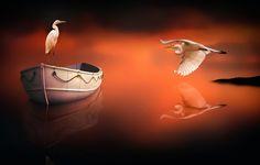 Фото обои птицы, лодка, отражение