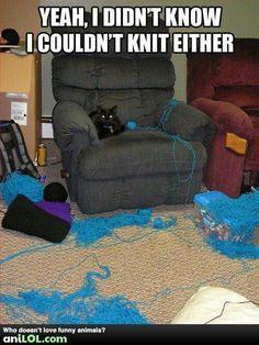 Kitty talent...