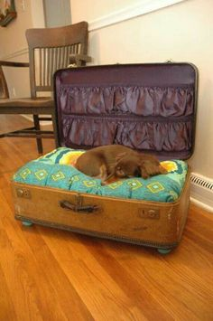 Upcycled: suitcase to dog bed!