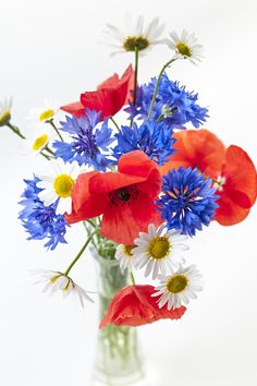 Image result for bouquet aster, cornflower, orange gerbera