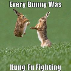 Ok, bunnies are freakin' funny when they do this!