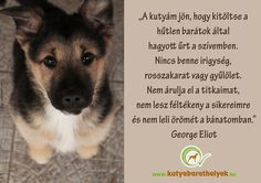 """A kutyám jön, hogy kitöltse a hűtlen barátok által hagyott űrt a szívemben… Pet Dogs, Dogs And Puppies, Animal Templates, Forever Living Products, Einstein, Quotations, Corgi, Motivational Quotes, Best Friends"