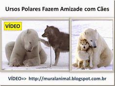 Mural Animal: Ursos Polares Fazem Amizade com Cães