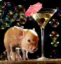Teacup Piglets, Baby Piglets, Cute Piglets, This Little Piggy, Little Pigs, Cute Baby Pigs, Pot Belly Pigs, Small Pigs, Mini Pigs