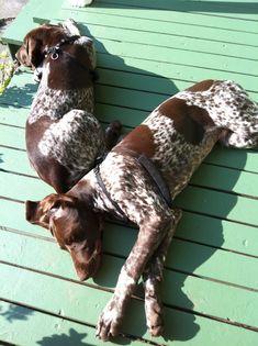 Archer & Marlowe love the morning sun.!