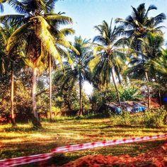 """#HDR #NoFilter #paltrees #goa #travel #incrediblegoa"""