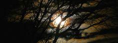 Creepy Moonlight through Trees - Halloween Cover