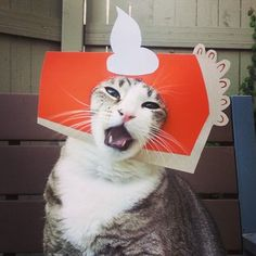 This cat who was embarrassingly excited for Thanksgiving. | The 41 Most Awkward Cats Of 2014