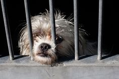 Puppy Mills - Victoria Stilwell shares the many reasons you should Here's why you should never purchase a puppy from a pet store, a flea market, or on the Internet