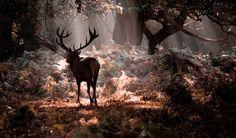 Richmond Deer by Mark Simms