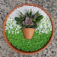Succulent Arrangements Pots Dish Garden 35 Ideas For 2019 Succulents In Containers, Cacti And Succulents, Planting Succulents, Planting Flowers, Cactus Plants, Container Flowers, Flowers Garden, Container Plants, Air Plants