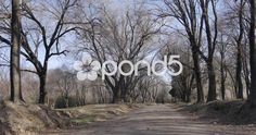 Reartes forest in winter - Stock Footage Video Footage, Stock Video, Stock Footage, Videos, Royalty, Neon Signs, Winter, Cordoba, Argentina