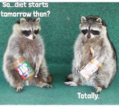 The Best Funny Pictures Of Today's Internet  RuinMyWeek.com #funny #pics #pictures #photos #hilarious #humor #comedy #diet #food