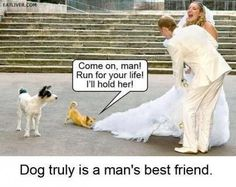 dog animal pulling brides dress run man truly best friend funny pics pictures pic picture image photo images photos lol Super Funny, Really Funny, Funny Cute, The Funny, Funny Animal Pictures, Funny Images, Funny Animals, Funny Shit, Funny Posts