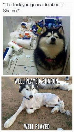 Naughty word but still funny....well played Sharon!