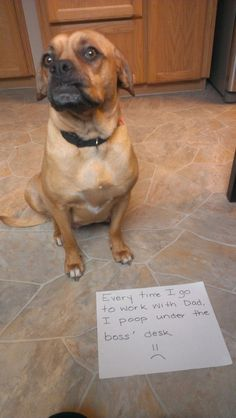 10 Dogs Who Are Passive-Aggressive Poopers | 5 | - Three Million Dogs