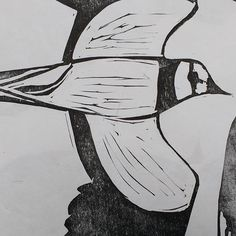 Lapwings test print ... . . . . .#linocut #printmaking #blockprinting #lino #peewit #lapwing #wildlifeartist #birdart #birdartist #wildbird