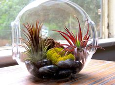 Wholesale Large Glass Terrarium with 2 Open Ends