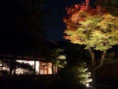 高台寺 Kyoto/Japan