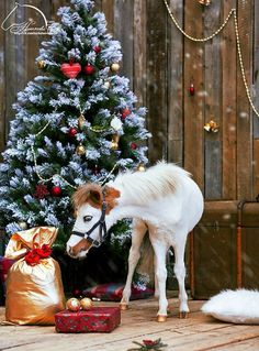 Free horse e-card and e-gift Merry Christmas and happy new year ...