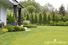 Ogród z lustrem - strona 347 - Forum ogrodnicze - Ogrodowisko