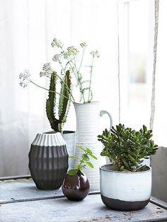 Jarrones minimalistas con plantas