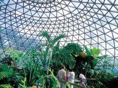 Mt Cootha Botanic Gardens, Brisbane