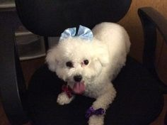 Rosa has gone bow crazy! Has Gone, Bows, Animals, Arches, Bowties, Animaux, Bow, Animal, Animales