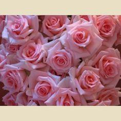 32 best miniature roses images beautiful flowers flowers rh pinterest com