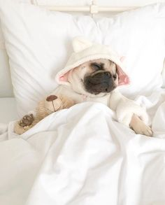 In a love affair with lazy saturdays  @pugloulou #petfriendly #animallovers #pug #lovedogs #sweet #friday #dog #saturday